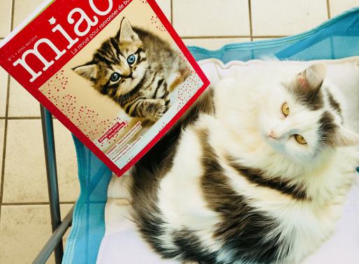 """Un nouveau magazine dédié aux chats: """"Miaou, la revue pour ronronner de bonheur"""""""