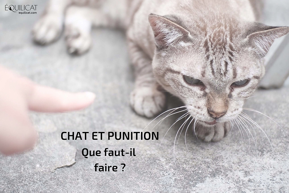 Chat et punition : que faut-il faire ?