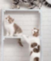 EquiliCat Aménagement intérieur pour chats Catification