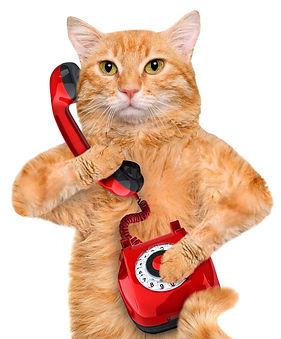 EquiliCat Service Hotline ChatLine
