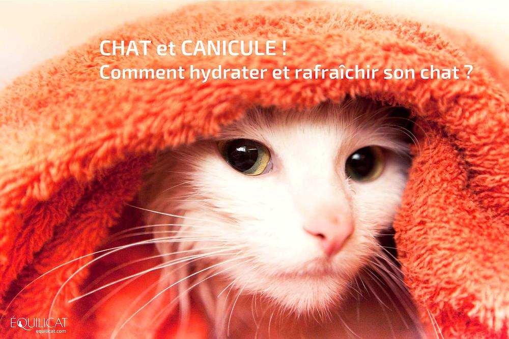 canicule et chat, astuces pour hydrater et rafraîchir son chat