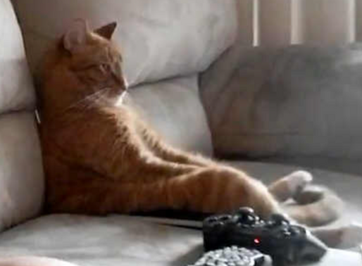 Mon Top 5 des films sur les chats !