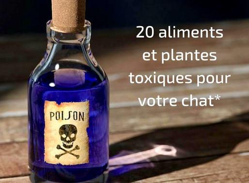 Aliments et plantes toxiques pour le chat