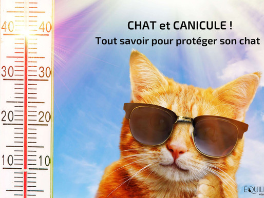 Chat et Canicule, tout savoir pour protéger son chat !