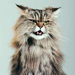 comportemen chat