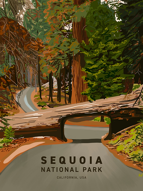 Sequoia National Park Print/Postcard