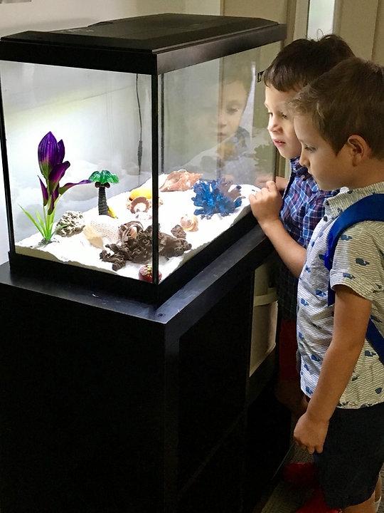 Little kids watching hermit crbs_edited.jpg