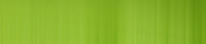 Green background for homepage.jpg