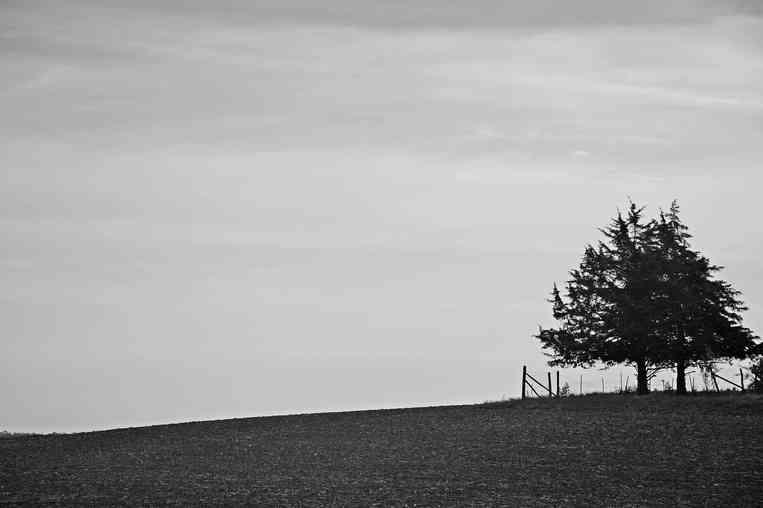 Trees on the Horizon
