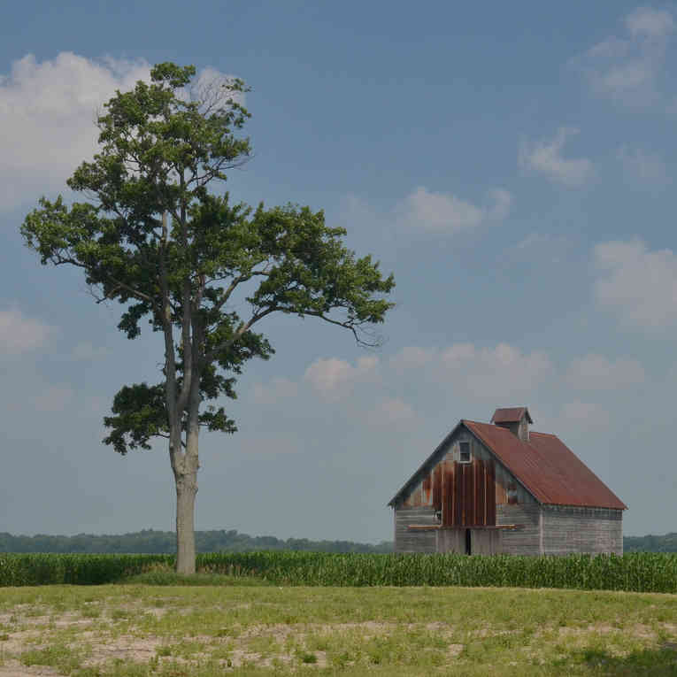 Tree & Barn