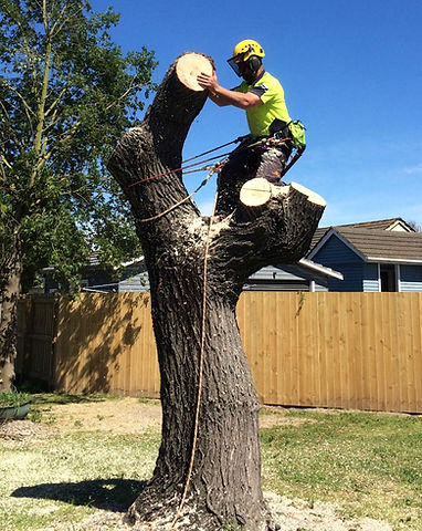 Tree Medic Felling Arborist.jpg
