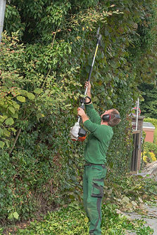 Tree Medic Hedge Trimming
