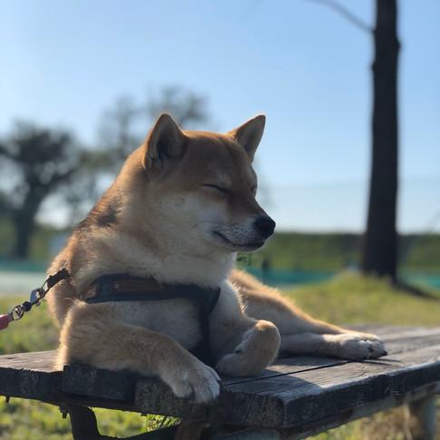 Sleepy Mame-chan