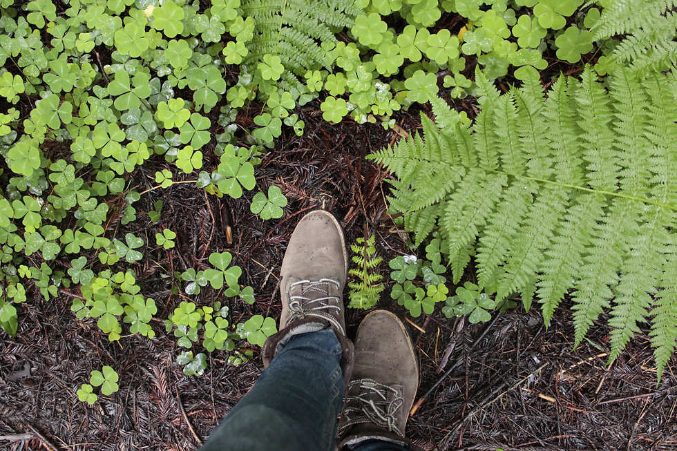 Boots and Oxalis.JPG