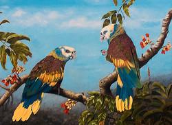 Perroquets de St Vincent