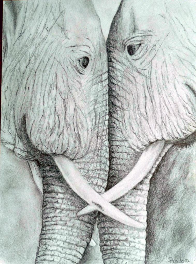 Solanne élèphants