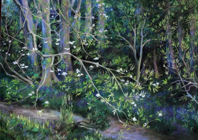 Le sous bois aux jacinthes