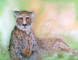 guepard Daniele