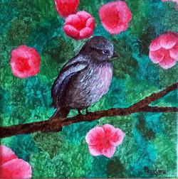 Solanne oiseau imaginaire