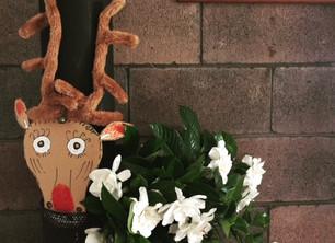 A Christmas Picnic - and a big prize.