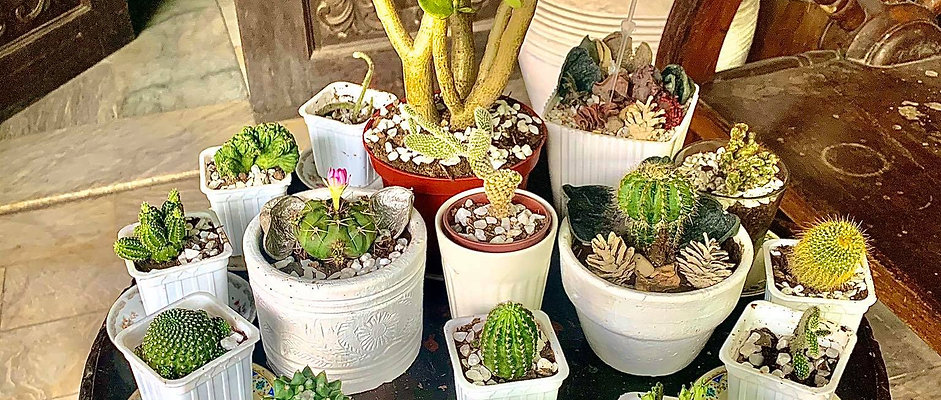 10 DIFFERENT CACTI