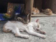 Abandoned-sick-kittens-10-3-d838.jpg