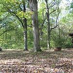 Algonquin Campsite.JPG