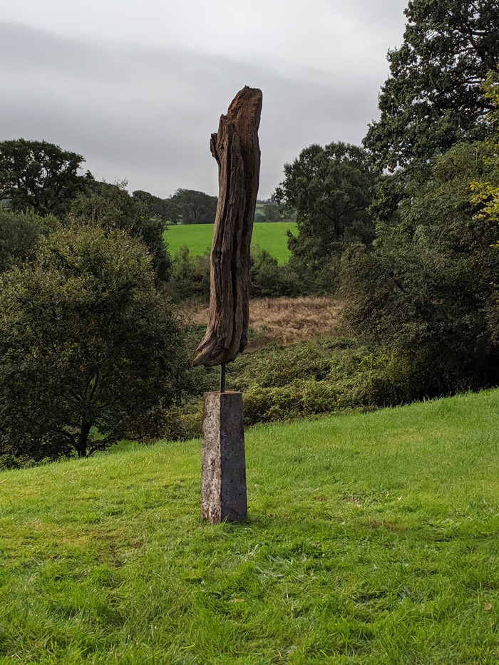 Ancient found oak