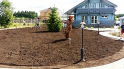 Рулонный газон в процессе производства работ
