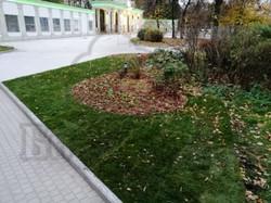 Сокольники - озеленение