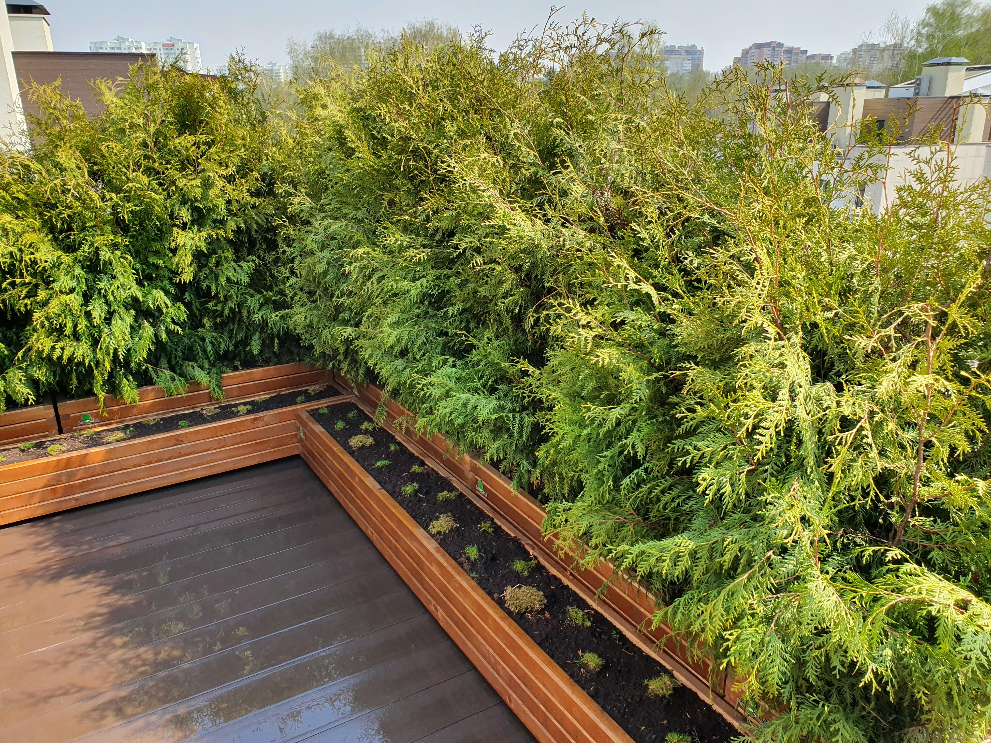 Озеленение крыши таунхауса