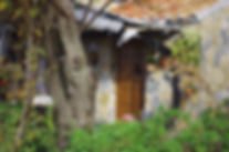 maison-nature-verdure-cocon.jpg