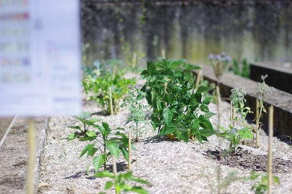 buttes-permaculture-ferme-croix-rousse-l