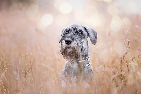 hundefotograf hundefotografin dortmund n