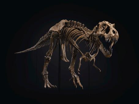 Удивительные скелеты животных в Нью-Йорке и Москве.
