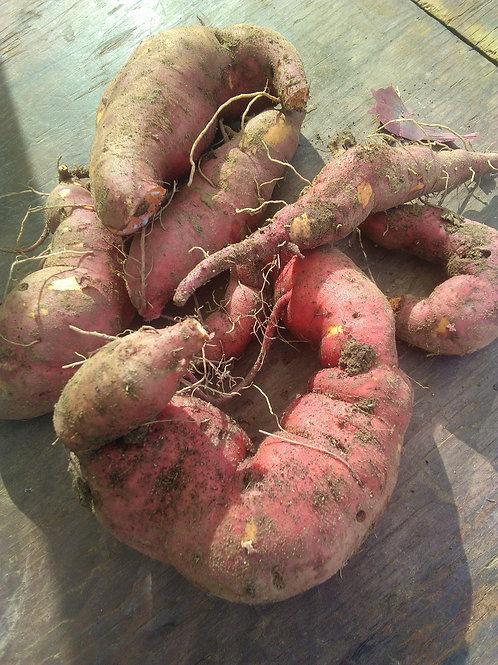 Patates douces bio , 500g