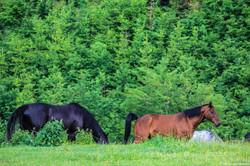 Kralova kone, pes, ludia-95.jpg