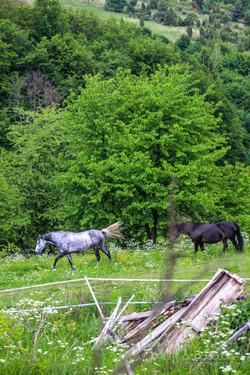 Kralova kone, pes, ludia-99.jpg