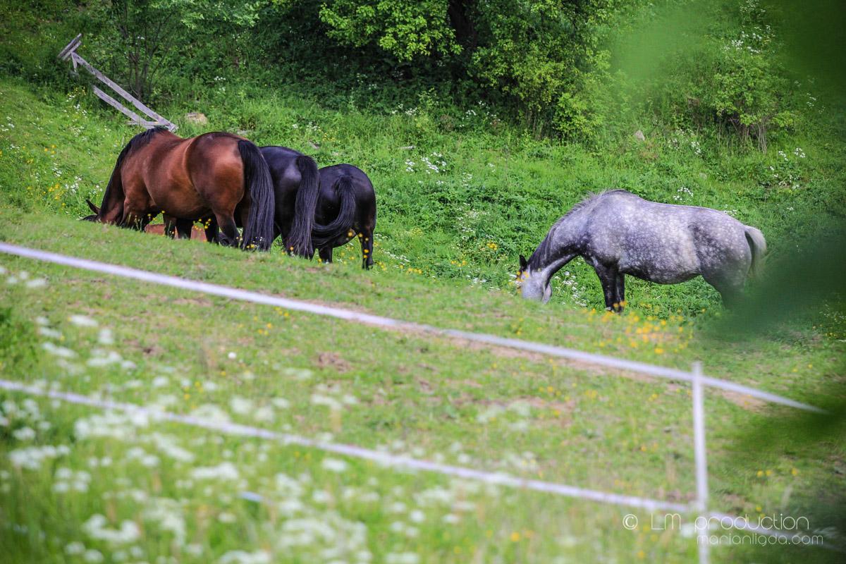 Kralova kone, pes, ludia-28.jpg