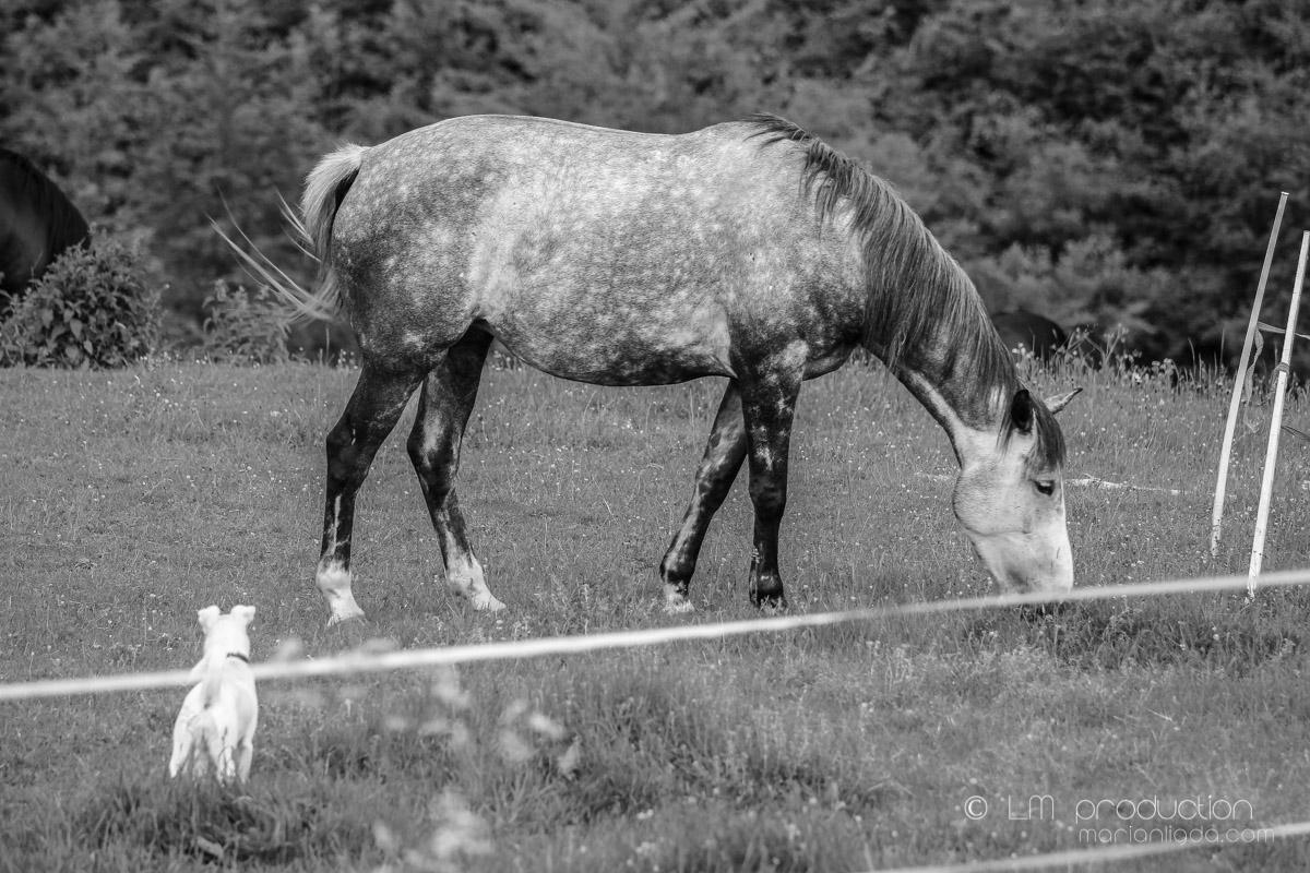 Kralova kone, pes, ludia-91.jpg
