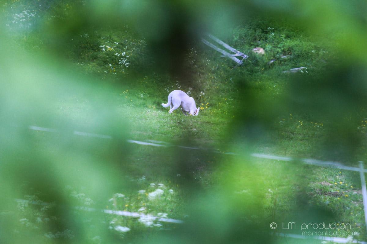 Kralova kone, pes, ludia-13.jpg