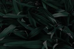 bg_plantas