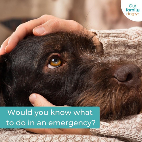 Allwinds founder Amanda chats with Our Family Dog about all things Dog First Aid!