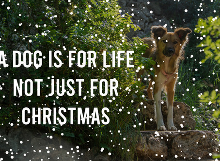 A dog is for life....not just for Christmas