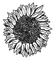 Dessin noir et blanc tournesol Confluences Ingénieurs conseil