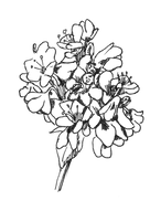 illustration sarasin