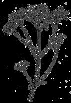 Dessin noir et blanc plante Confluences Ingénieurs conseil