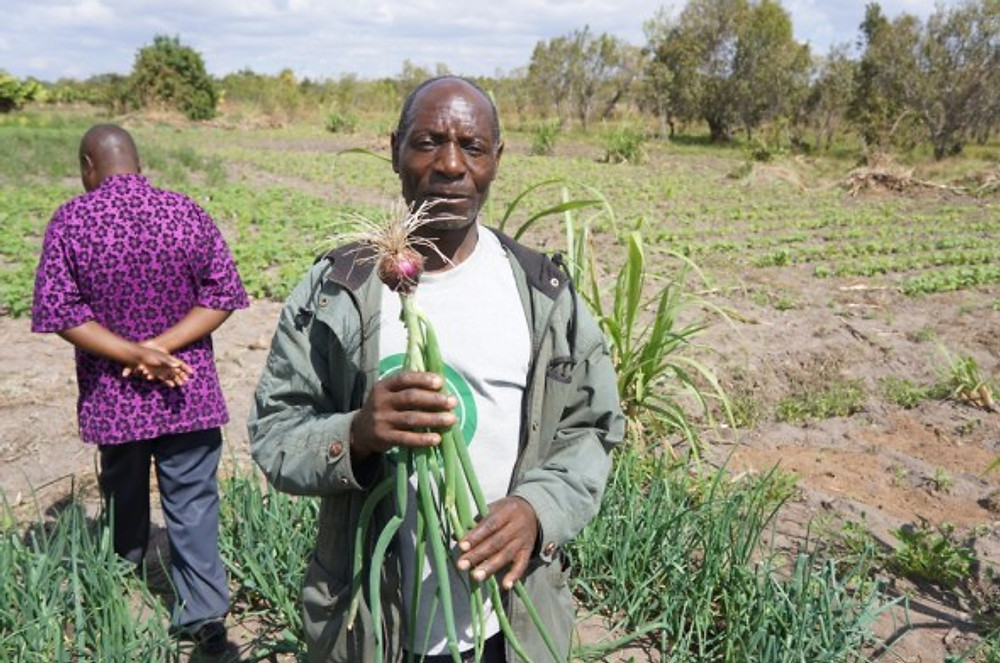 After Finly joined the COMSIP cooperative and began saving, he used a small loan to buy improved Red Creole onion seeds for his farm.