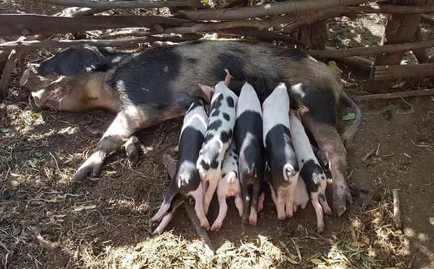 Down on the farm…