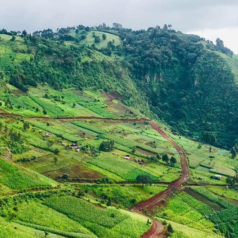 crops on a green hillside